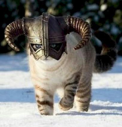 3672ece7608b8c8144c0a9aa30aa1f3d-elder-scrolls-funny-cats